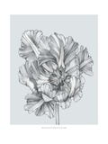 Silvery Blue Tulips I Print by Jennifer Goldberger