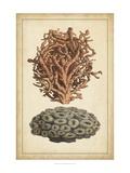 Coral Companions III Prints by  Vision Studio