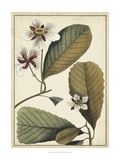 Ivory Botanical Study III Prints by Vision Studio
