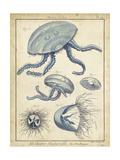 Lamarck Medusa II Posters by  Lamarck