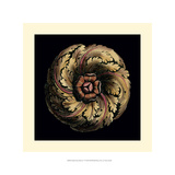 Small Classic Rosette V Giclee Print by Vision Studio
