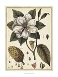 Ivory Botanical Study I Art by Vision Studio