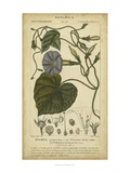 Floral Botanica I Giclee Print by Turpin 
