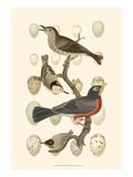 British Birds and Eggs III Poster by  Vision Studio