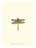 Miniature Dragonfly III Posters by  Vision Studio
