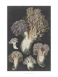 Genus Clavaria I Poster by Leuba F.