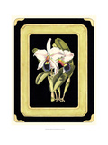 Orchids on Black I Prints by J. Nugent Fitch