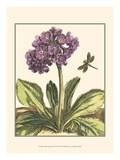 Garden VIgnette III Prints by Johann DeBry
