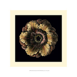 Small Classic Rosette III Prints by  Vision Studio
