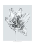 Silvery Blue Tulips II Prints by Jennifer Goldberger