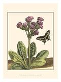 Garden VIgnette II Print by Johann DeBry