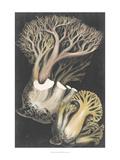 Genus Clavaria III Print by Leuba F.
