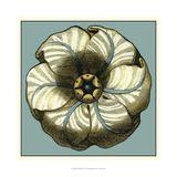 Floral Medallion IV Prints by Vision Studio