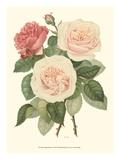 Vintage Roses II Plakater af Vision Studio