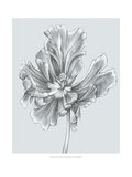Silvery Blue Tulips III Print by Jennifer Goldberger