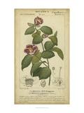 Floral Botanica III Plakater af Turpin