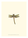 Miniature Dragonfly I Print by  Vision Studio