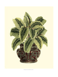 Lush Foliage in Urn I Posters by  Vision Studio