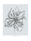 Silvery Blue Tulips IV Prints by Jennifer Goldberger