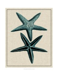 Coastal Starfish III Prints by  Vision Studio
