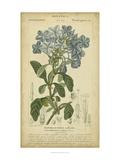 Floral Botanica II Posters af Turpin
