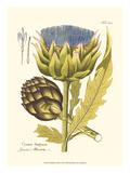 Artichoke, Pl. 462 Prints