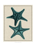Coastal Starfish II Print by  Vision Studio