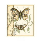 Tandem Butterflies I Poster by Jennifer Goldberger