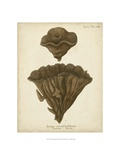 Coral Collection VIII Prints by Johann Esper