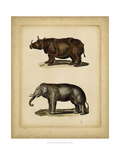 Studies in Natural History III Prints by  Vision Studio