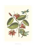 Midsummer Floral IV Prints by Chariklia Zarris