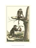Macaque and Douc Monkeys Giclee-tryk i høj kvalitet af Denis Diderot