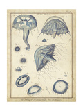 Lamarck Medusa I Prints by  Lamarck