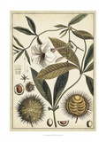 Ivory Botanical Study II Posters by  Vision Studio