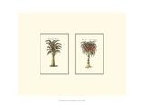 Miniature Palm II Posters af  Vision Studio