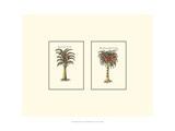 Miniature Palm II Posters by  Vision Studio