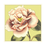 Flower Power III Prints by Deborah Bookman