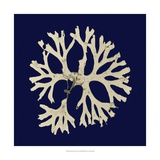 Seaweed on Navy I Posters by  Vision Studio