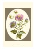 Antique Bouquet II Prints by Sydenham Teast Edwards