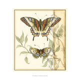 Tandem Butterflies II Prints by Jennifer Goldberger