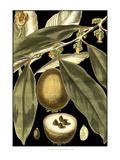 Tranquil Tropical Leaves IV Art par  Vision Studio