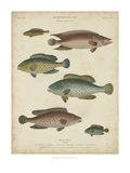 Non-Embellish Ichthyology I Posters by Rees Abraham