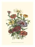 Summer Flowers III Premium Giclee Print