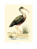 Water Birds I Reproduction procédé giclée par Meyer H.l.