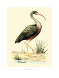 Water Birds I Prints by H.l. Meyer