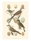 British Birds and Eggs I Giclée-Premiumdruck von  Vision Studio