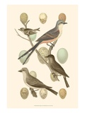 British Birds and Eggs I Posters by  Vision Studio
