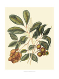 Foliage, Flowers and Fruit I Giclee Print by Vision Studio