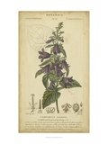 Floral Botanica IV Poster af Turpin
