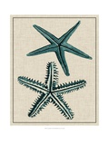 Coastal Starfish I Prints by  Vision Studio